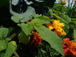 Manna Community Garden
